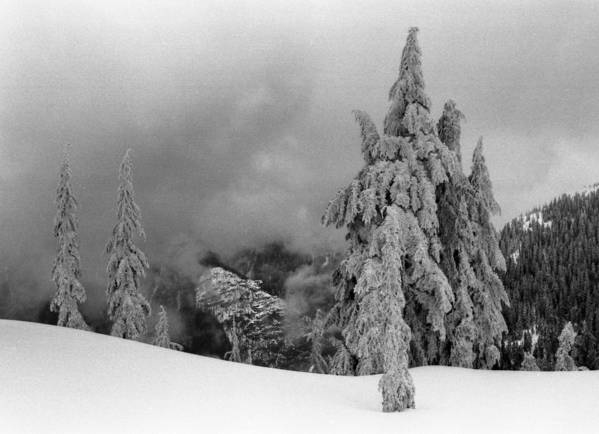 Winter Poster featuring the photograph Fresh Snow On The Trees by Lyle Crump