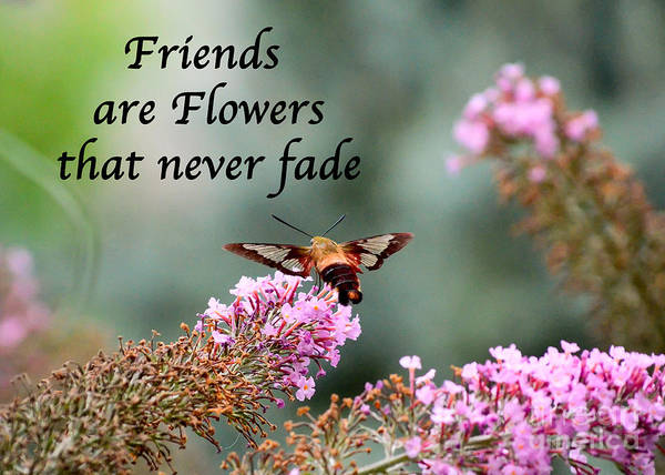 Friends Poster featuring the photograph Friends Are Flowers That Never Fade by Kerri Farley
