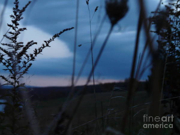 Sun Rising Between Fern And Weed Poster featuring the photograph Frill Sun by Wayde Gordon