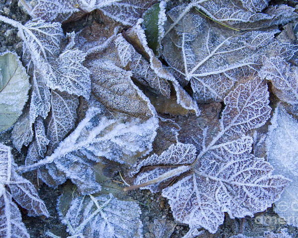 Frost Poster featuring the photograph Frost by Idaho Scenic Images Linda Lantzy