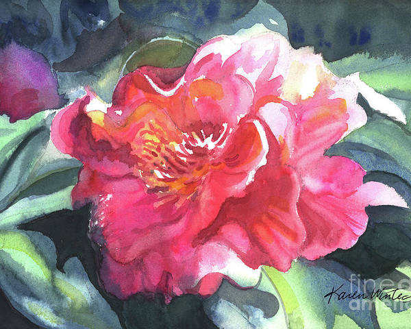 Camellia Poster featuring the painting Full Blown by Karen Winters