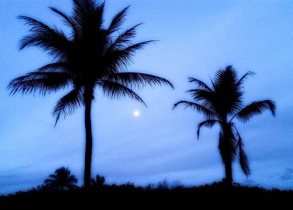 Palm Trees Poster featuring the photograph Full Moon Sunrise by Jenn Beck