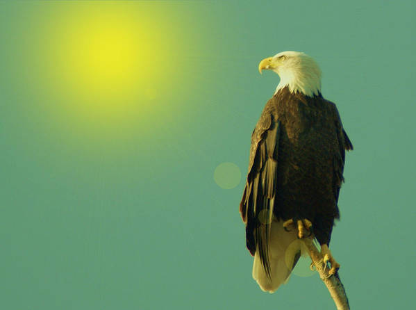 Eagles Poster featuring the photograph Gazing Sunward by Jeff Swan