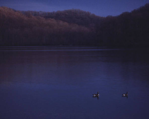 Nashville Poster featuring the photograph Geese On Radnor Lake by Randy Muir