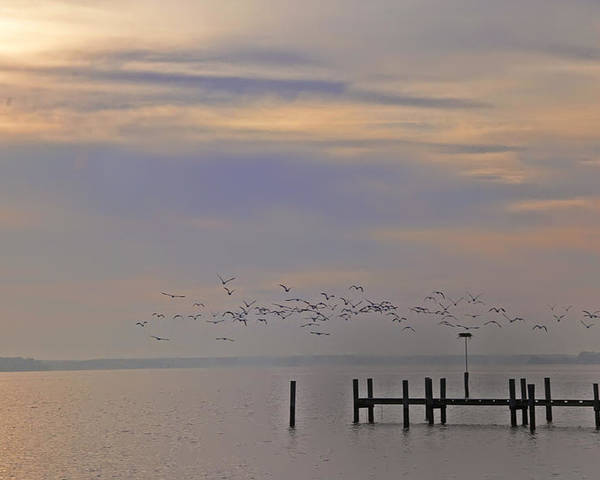 Chesapeake Poster featuring the photograph Geese Over The Chesapeake by Bill Cannon