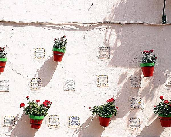 Jez C Self Poster featuring the photograph Geraniums Ganging Up by Jez C Self