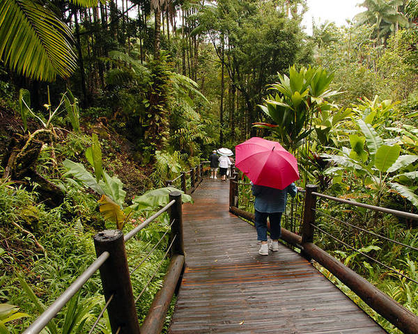 Fine Art Umbrella Greeting Cards. Red Umbrella Greeting Cards. People Red Umbrella Greeting Cards. Umbrella Canvas Pictures.unbrella Rainforest Greeting Cards. Pathway Greeting Cards. Fine Art Rainforest Canvas Prints. Storm Canvas Prints. Fine Art Pictures. Poster featuring the photograph Getting To The Bottom by James Steele