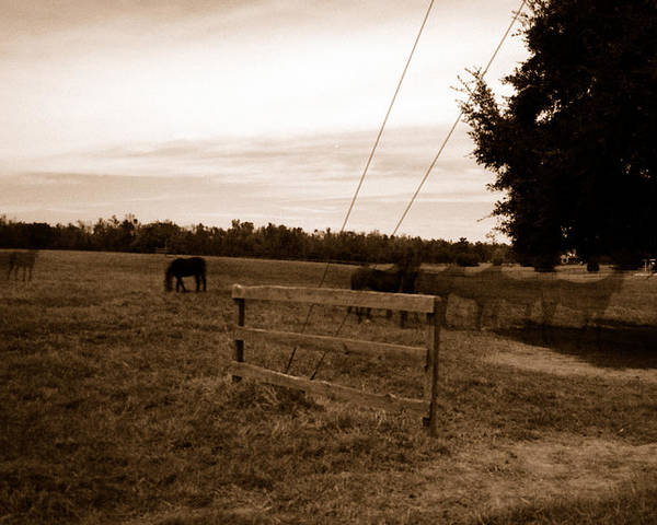 Horses Poster featuring the photograph Ghost Horses Of Huckleberry Lane by Heather S Huston