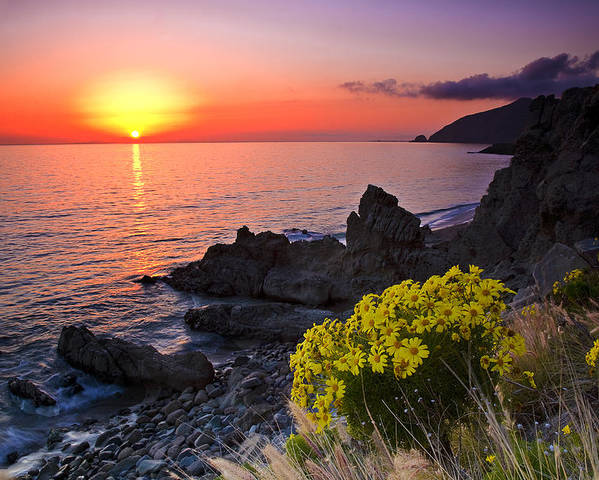 Beaches Poster featuring the photograph Giant Coreopsis Sunset 2 by Greg Clure
