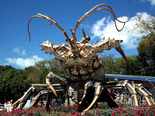 Lobster Poster featuring the photograph Giant Lobster by Tammy Chesney