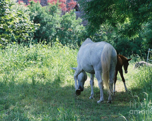 And Poster featuring the photograph Giverny Mare And Foal Landscape by Nadine Rippelmeyer