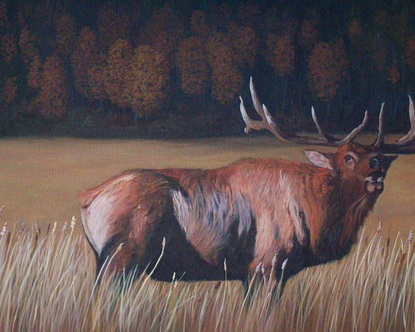 Bull Elk Paintings Poster featuring the painting Go Big Or Go Home by Bill Werle