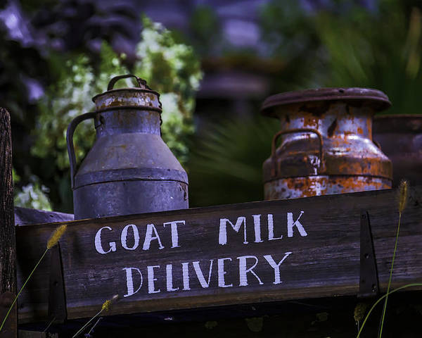 Still Life Poster featuring the photograph Goat Milk Delivery by Garry Gay
