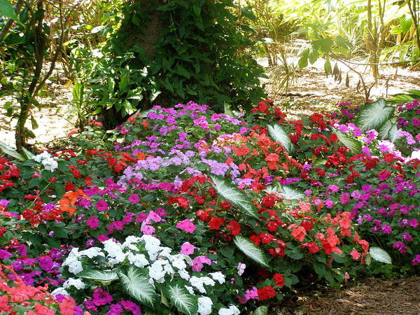 Flowers Poster featuring the photograph God Using His Paintbrush by Jeanette Oberholtzer