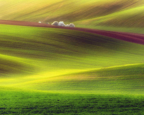 Bax Poster featuring the photograph Golden Fields by Piotr Krol (bax)