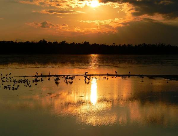 Sunsets Poster featuring the photograph Golden Nights by Rosalie Scanlon