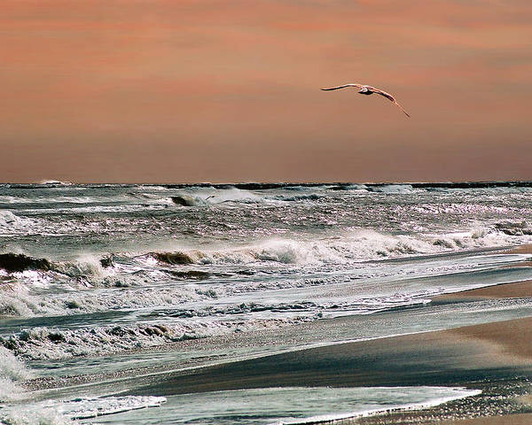 Seascape Poster featuring the photograph Golden Shore by Steve Karol