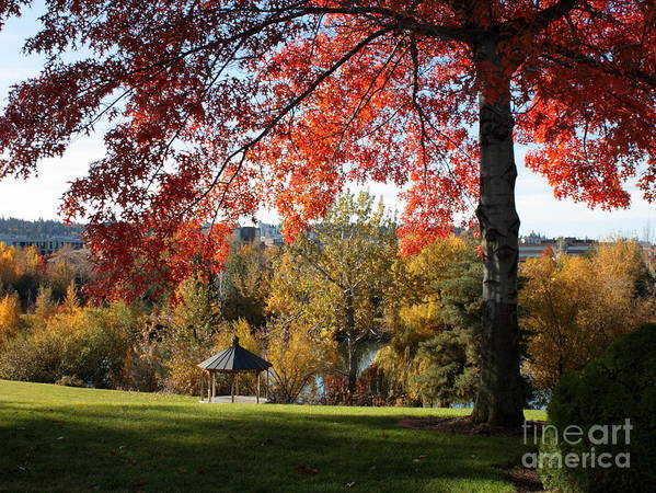 Spokane Poster featuring the photograph Gonzaga With Autumn Tree Canopy by Carol Groenen