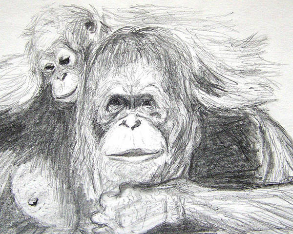 Wildlife Poster featuring the drawing Gorillas by Vallee Johnson