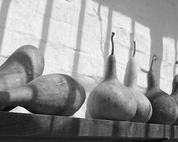 Gourds Poster featuring the photograph Gourds On A Shelf by Lauri Novak