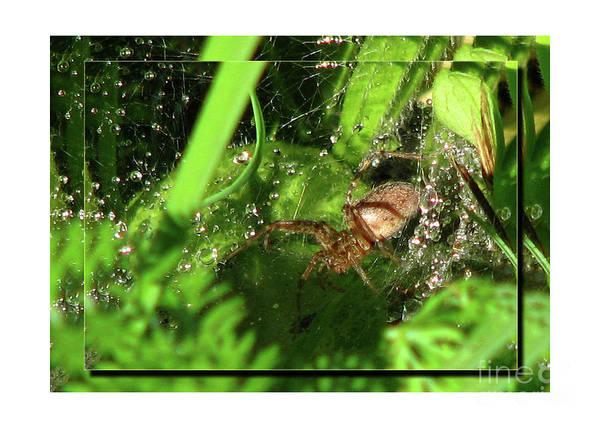 Deborah Johnson Poster featuring the photograph Grass Spider by Deborah Johnson