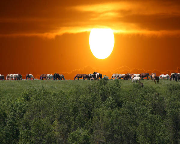 Horses Herd Sunset Grass Trees Nature Animals Scenery Sun Poster featuring the photograph Grazing by Andrea Lawrence