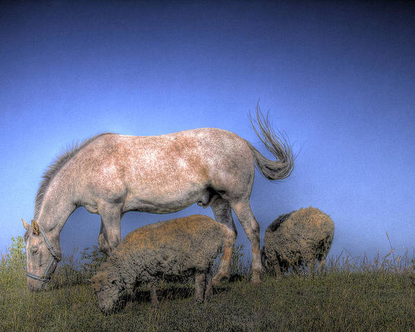 Horse Poster featuring the photograph Grazing by Naman Imagery
