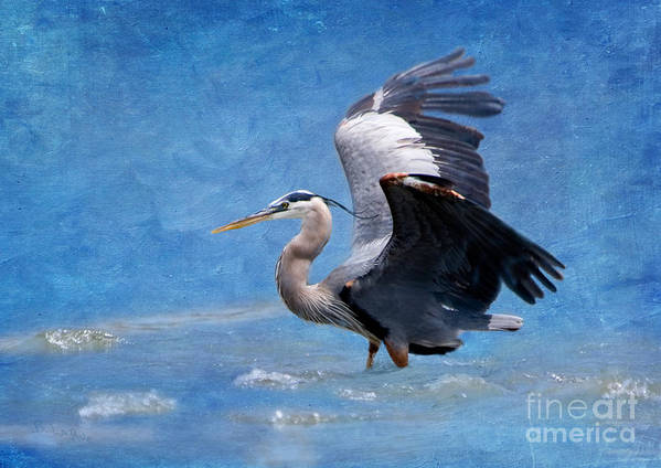 Great Blue Heron Poster featuring the photograph Great Blue Heron by Betty LaRue