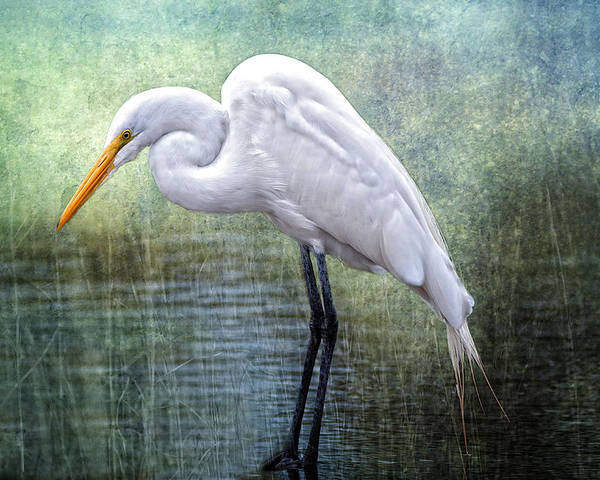 Egret Poster featuring the photograph Great White Egret by Bonnie Barry