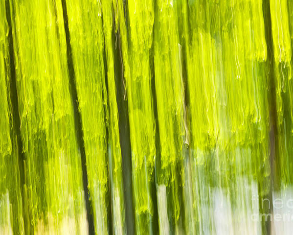 Abstract Poster featuring the photograph Green Forest Abstract by Elena Elisseeva