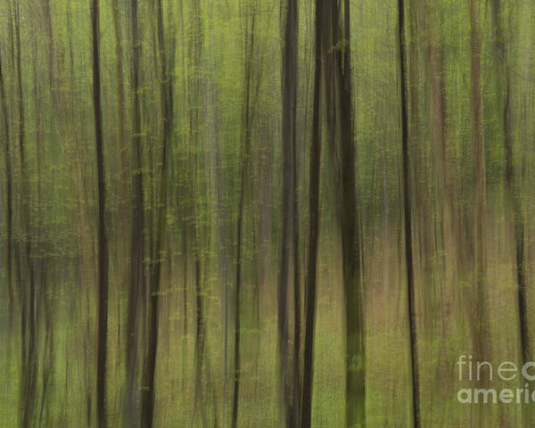 Canada. Poster featuring the photograph Green Forest by Julie DeRoche