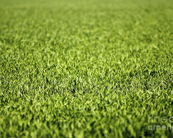 Grass Poster featuring the photograph Green Grass by Dan Radi