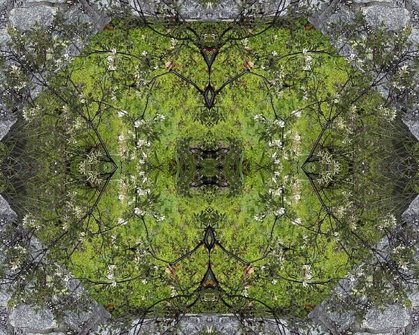 Green Poster featuring the photograph Green Mandala by Viktor Savchenko