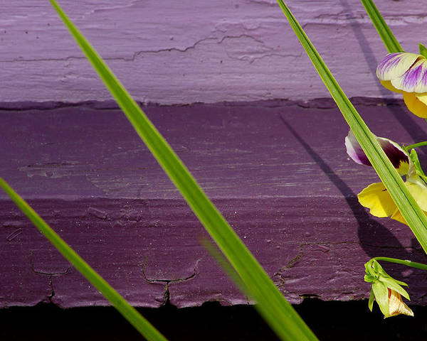 Abstract Poster featuring the photograph Green On Purple 6 by Art Ferrier