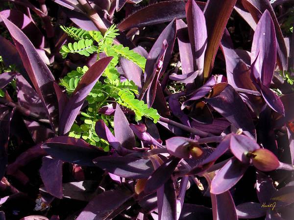 Carribean Plant Poster featuring the photograph Green Spot by Kurt Gustafson
