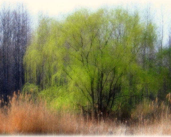 Scenic Art Poster featuring the photograph Green Tree by Linda Sannuti