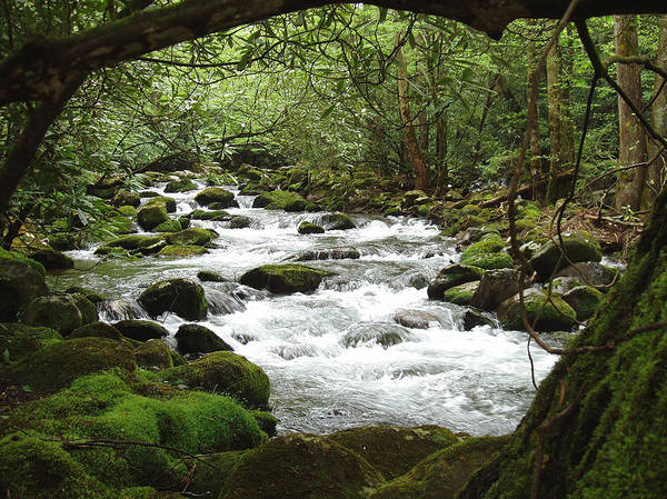 Smoky Mountains Poster featuring the photograph Greenbrier River Scene 2 by Nancy Mueller