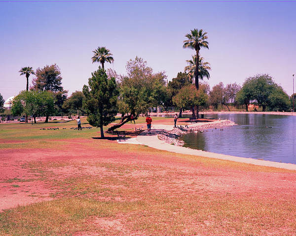 Grenada Park In Phoenix Az Attracts Ducks And Citizens To It Small Lake. Poster featuring the photograph Grenada2 by George Arthur Lareau