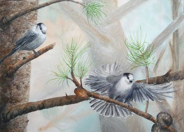 Grey Jay Poster featuring the painting Grey Jays In A Jack Pine by Ruth Kamenev