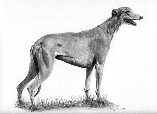 Dog Poster featuring the drawing Greyhound by Karen Townsend