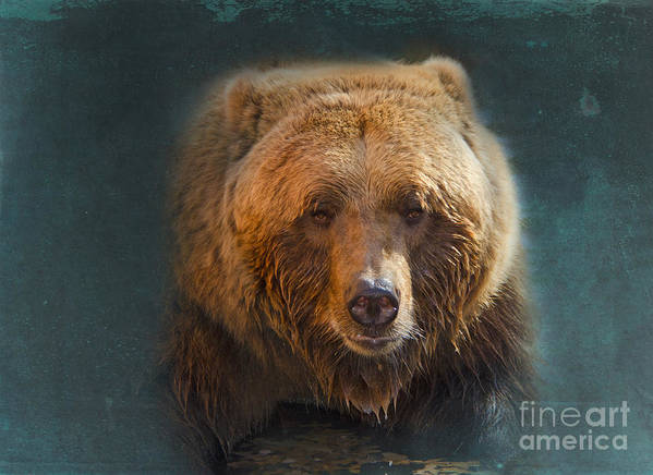 Bear Poster featuring the photograph Grizzly Bear Portrait by Betty LaRue