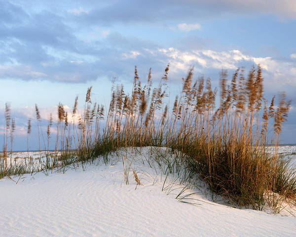 Alabama Poster featuring the photograph Gulf Dunes by Eric Foltz