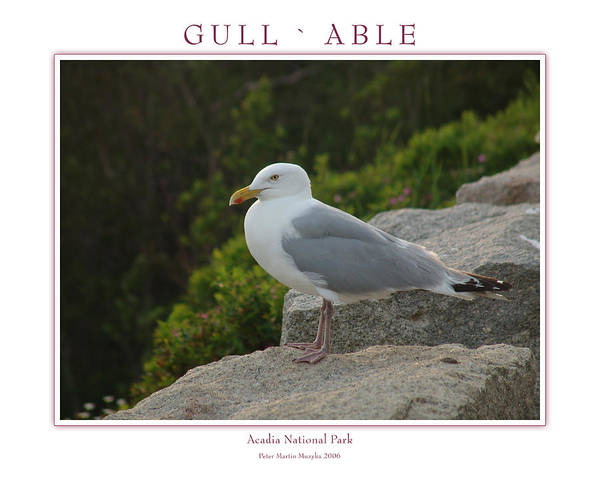 Landscape Poster featuring the photograph Gull Able by Peter Muzyka