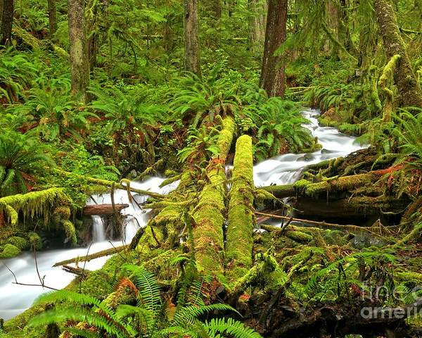 Rainforest Poster featuring the photograph Gushing Through Ferns And Forest by Adam Jewell