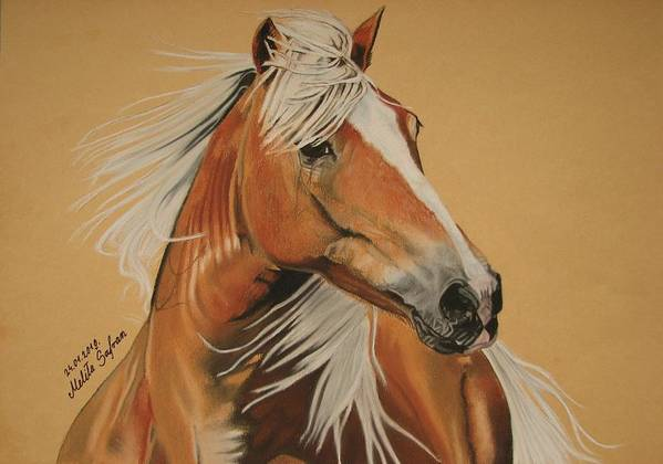 Horse Poster featuring the pastel Haflinger by Melita Safran