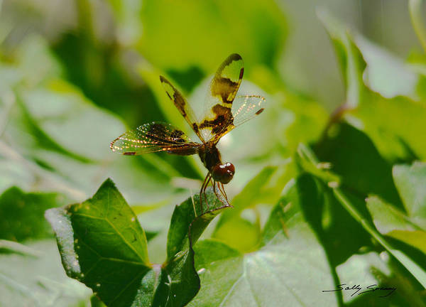 Dragonfly Poster featuring the pyrography Halloween Pennant by Sally Sperry