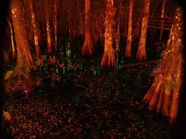 Halloween Poster featuring the photograph Halloween Woods by Florene Welebny