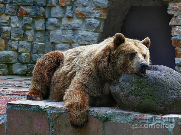 Bear Poster featuring the photograph Hanging Out by Jutta Maria Pusl