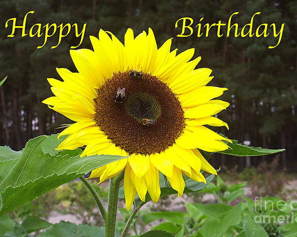 Happy Poster featuring the photograph Happy Birthday - Greeting Card - Sunflower by Sascha Meyer
