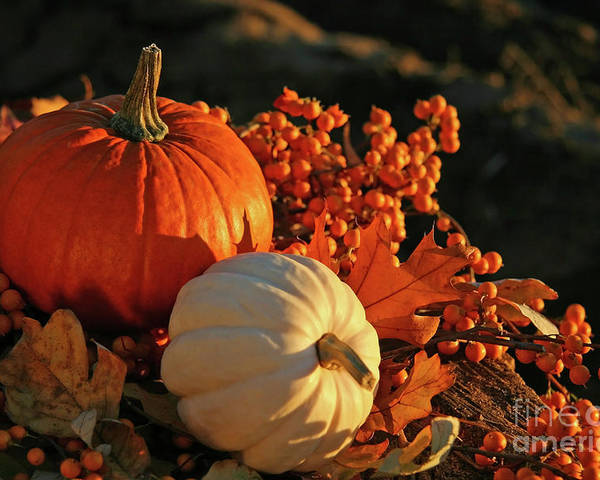 Autumn Poster featuring the photograph Harvest Colors by Sandra Cunningham